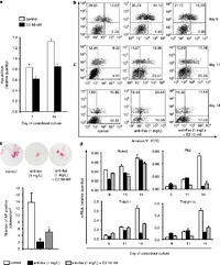 Fas receptor is required for estrogen deficiency-induced
