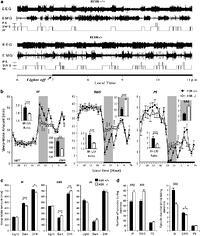 Enhanced Histaminergic Neurotransmission and Sleep-Wake