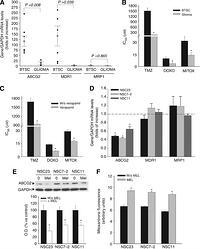 Melatonin-induced methylation of the ABCG2/BCRP promoter
