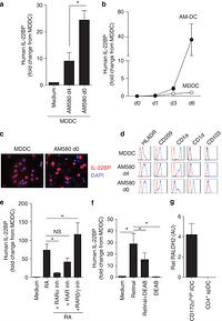 Interleukin-22 binding protein (IL-22BP) is constitutively