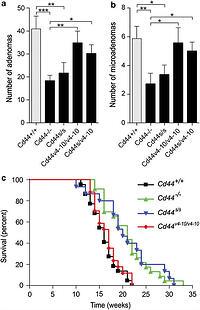 Stem cell CD44v isoforms promote intestinal cancer