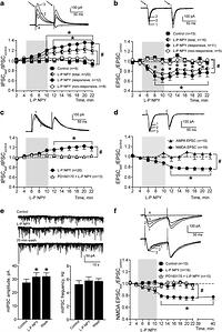 NPY Y1 Receptors Differentially Modulate GABAA and NMDA