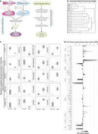 Insights in dynamic kinome reprogramming as a consequence