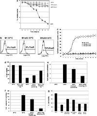 Phosphatidylinositol 3-kinase&Akt signaling mediates