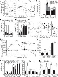 Lkb1 regulates cell cycle and energy metabolism in