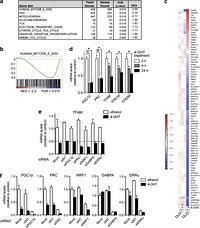 FOXO3a regulates reactive oxygen metabolism by inhibiting