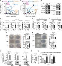 NF-κB non-cell-autonomously regulates cancer stem cell