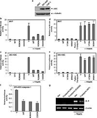 Cryopyrin and pyrin activate caspase-1, but not NF-κB, via