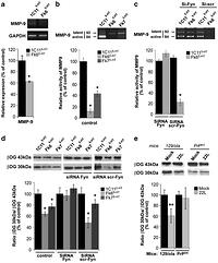 Pathogenic prions deviate PrPC signaling in neuronal cells