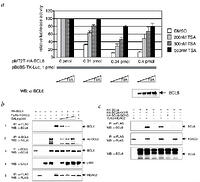 Acetylation inactivates the transcriptional repressor BCL6