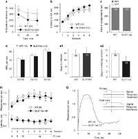 Glutaminase-Deficient Mice Display Hippocampal