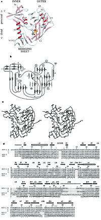 Structure of an HIV gp120 envelope glycoprotein in complex