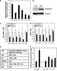 A novel oncogenic mechanism in Ewing sarcoma involving IGF