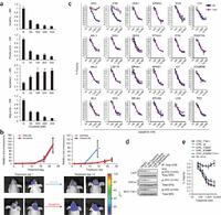 Bead-based profiling of tyrosine kinase phosphorylation