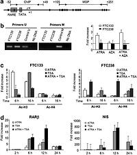 Epigenetic patterns of the retinoic acid receptor beta2