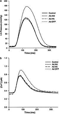 Adenoviral gene transfer of Akt enhances myocardial