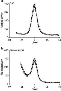 Flattening the Glucocorticoid Rhythm causes Changes in
