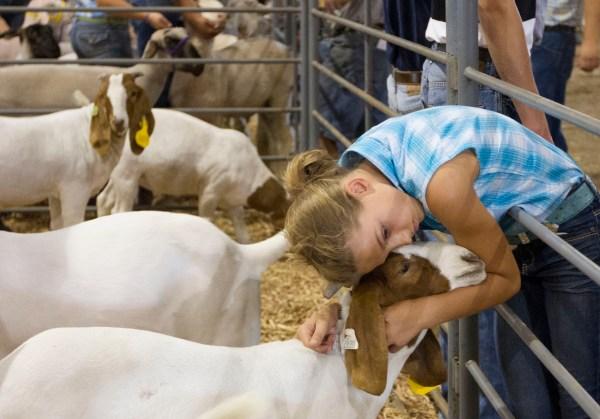 Goats Fair Auction 4- Ers Goodbye