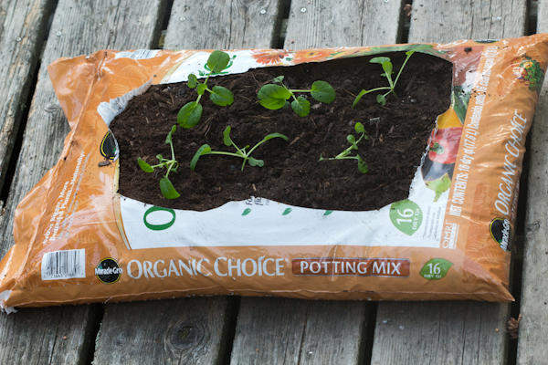 Create an Easy Organic Garden in Under 10 Minutes via oreeko.com