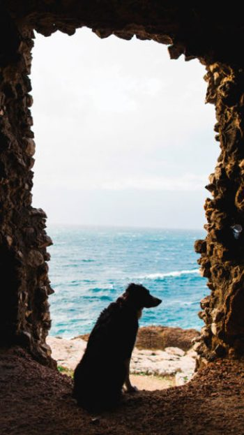 A silhouette of a dog in a stone archway in Italy