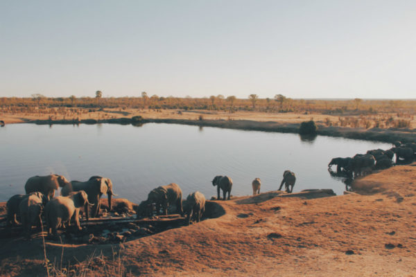 Wildlife at a watering hole in Zimbabwe