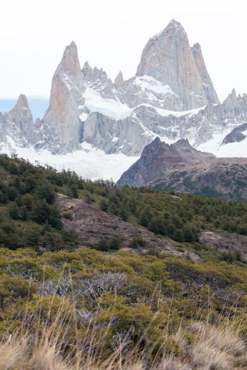 Scrub near Mount Fitz Roy, Patagonia