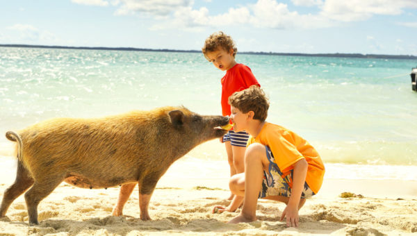 A pig on a beach takes a piece of fruit from a child's mouth