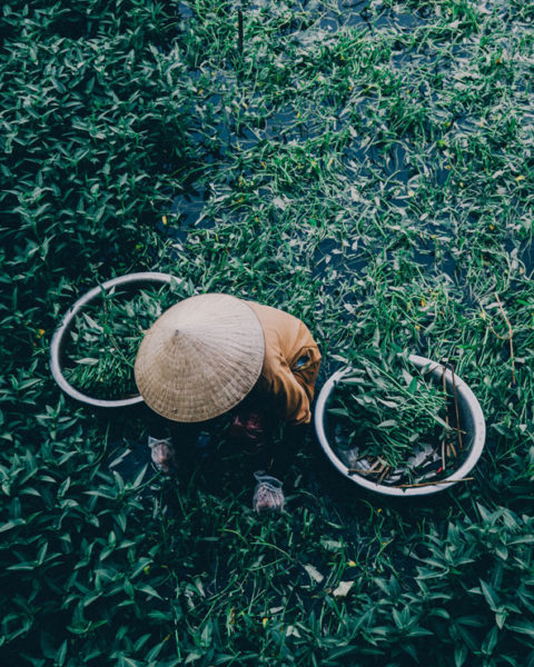 A photo by Jack Crosby of a person working in a rice paddy in Vietnam