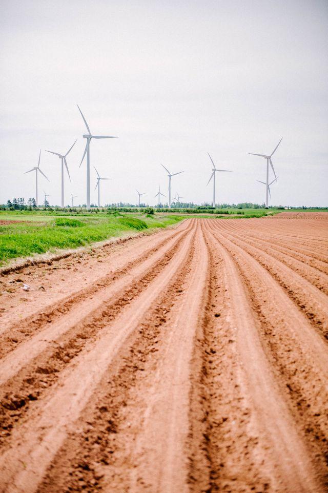 a wind farm on prince edward island.