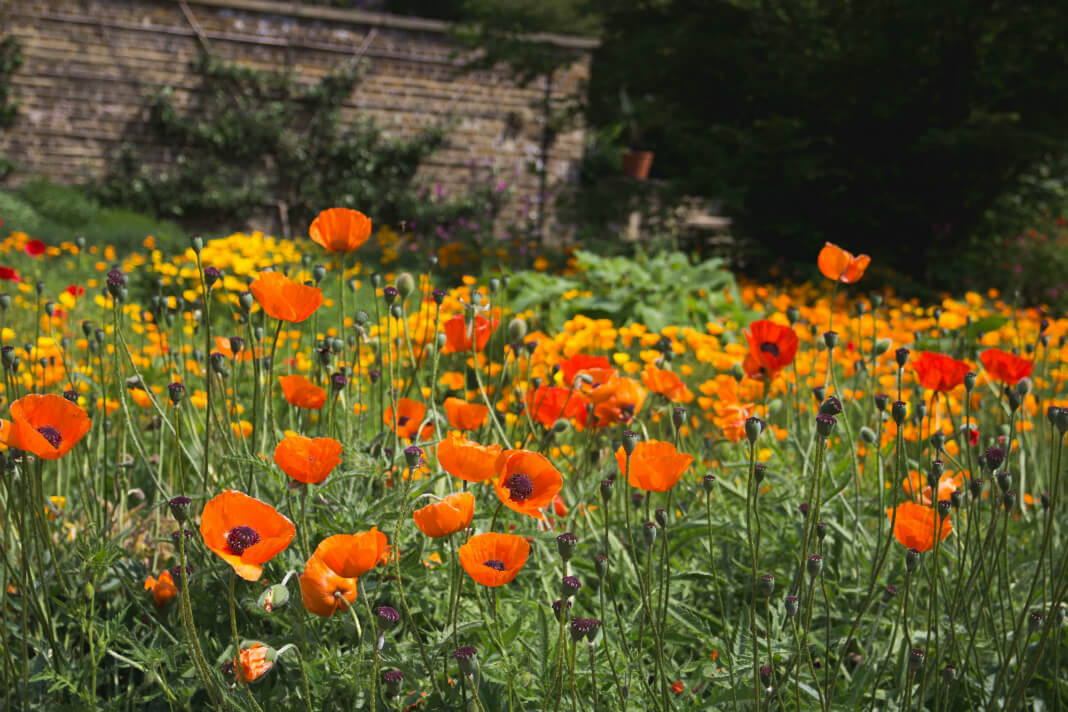 The Instagram Obsession That's Killing Flower Fields