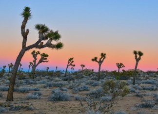a scene in joshua tree national park