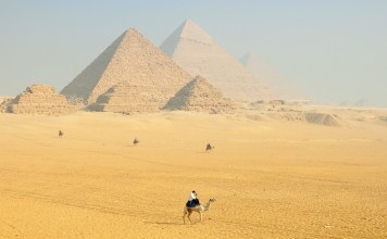 camels in the shadow of egyptian temples
