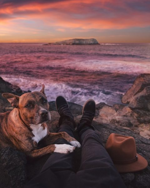 tips for flying with a dog leio mclaren