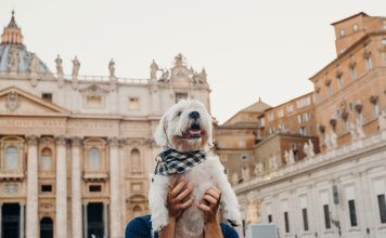 a dog at the vatican in our dog friendly guide to Rome