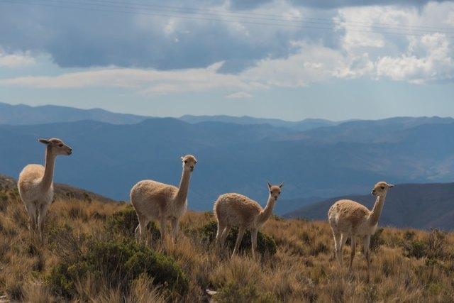 northwest argentina