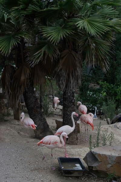 flamingos in garden