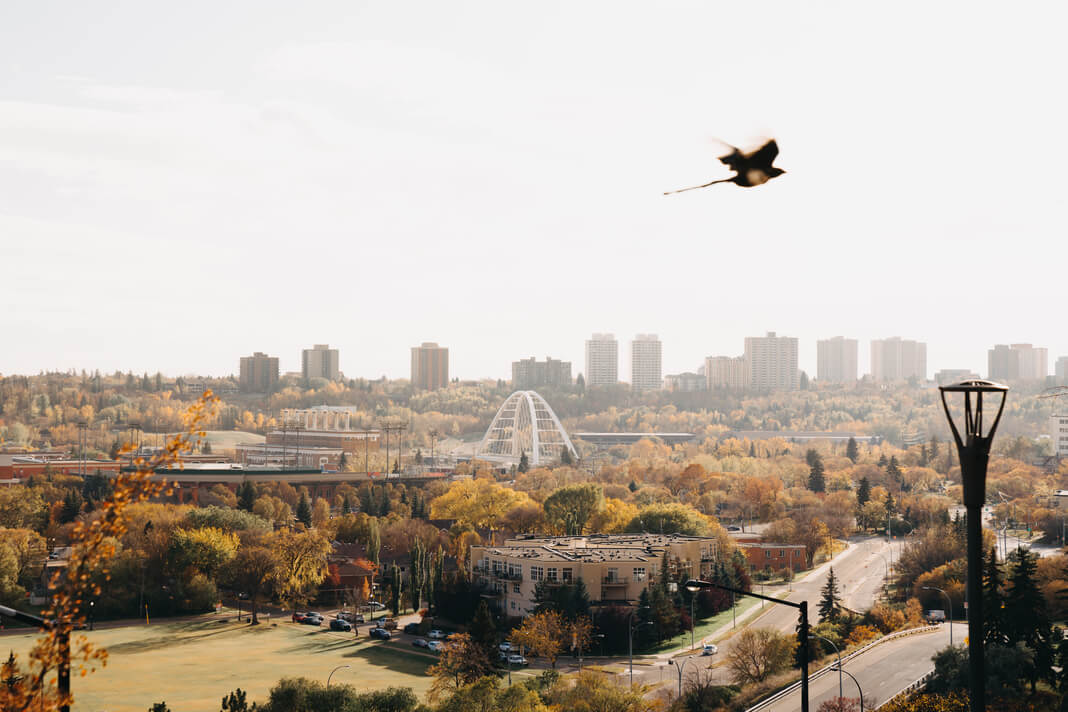bird flying over city