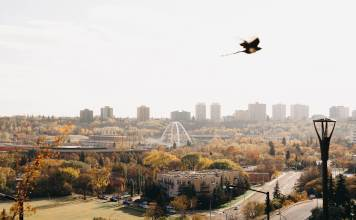 bird flying over city