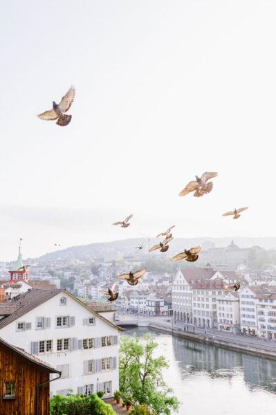 birds fly over zurich