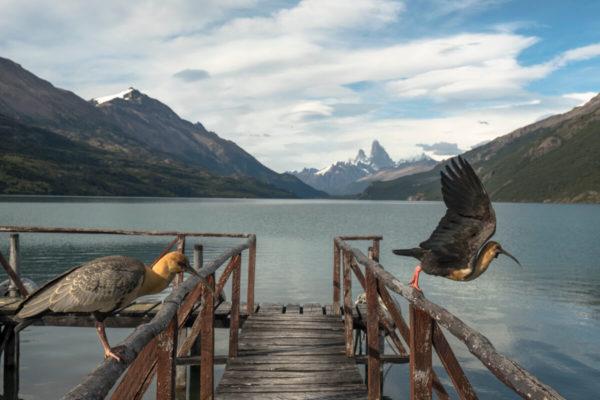 large birds on lake pier