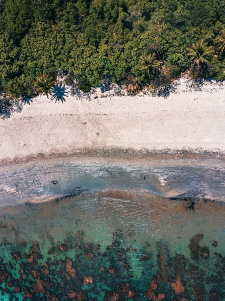 overhead view of tropical shoreline and forest