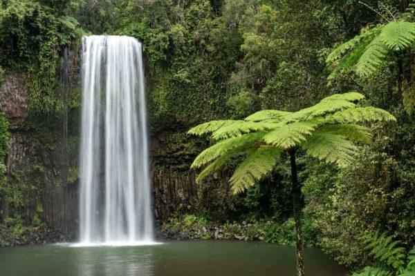 waterfall in green rainforest