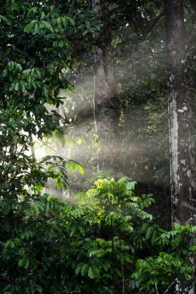 sunlight through rainforest trees