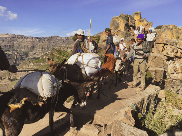 donkeys and herders on mountain pass