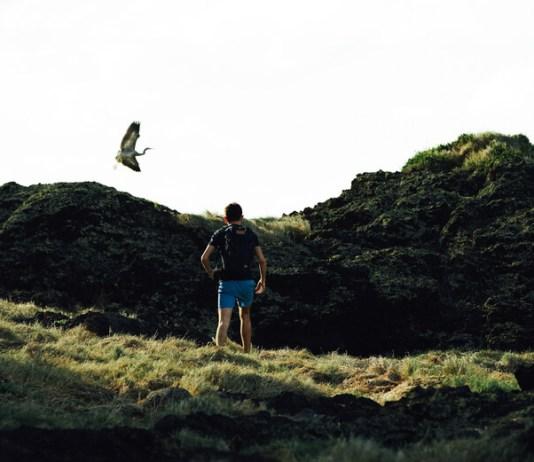 bird swooping above hiker's head