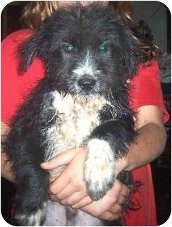 Doby Adopted Dog Arlington VA Border Collie