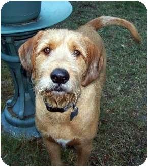 Buster Brown Adopted Dog Dallas TX Black and Tan