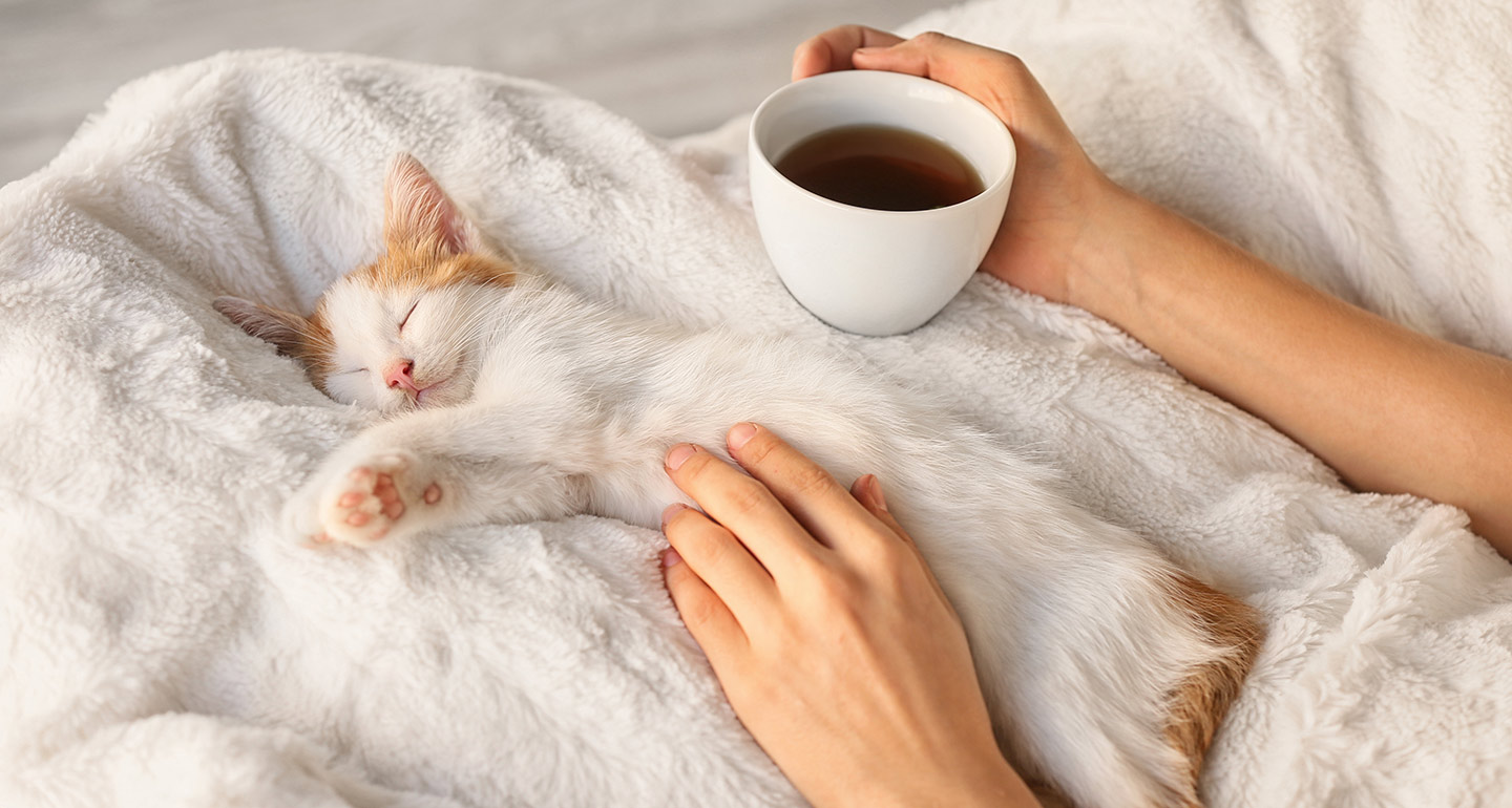 Your Cat's Sleep Schedule: How to Get a Cat to Sleep at Night