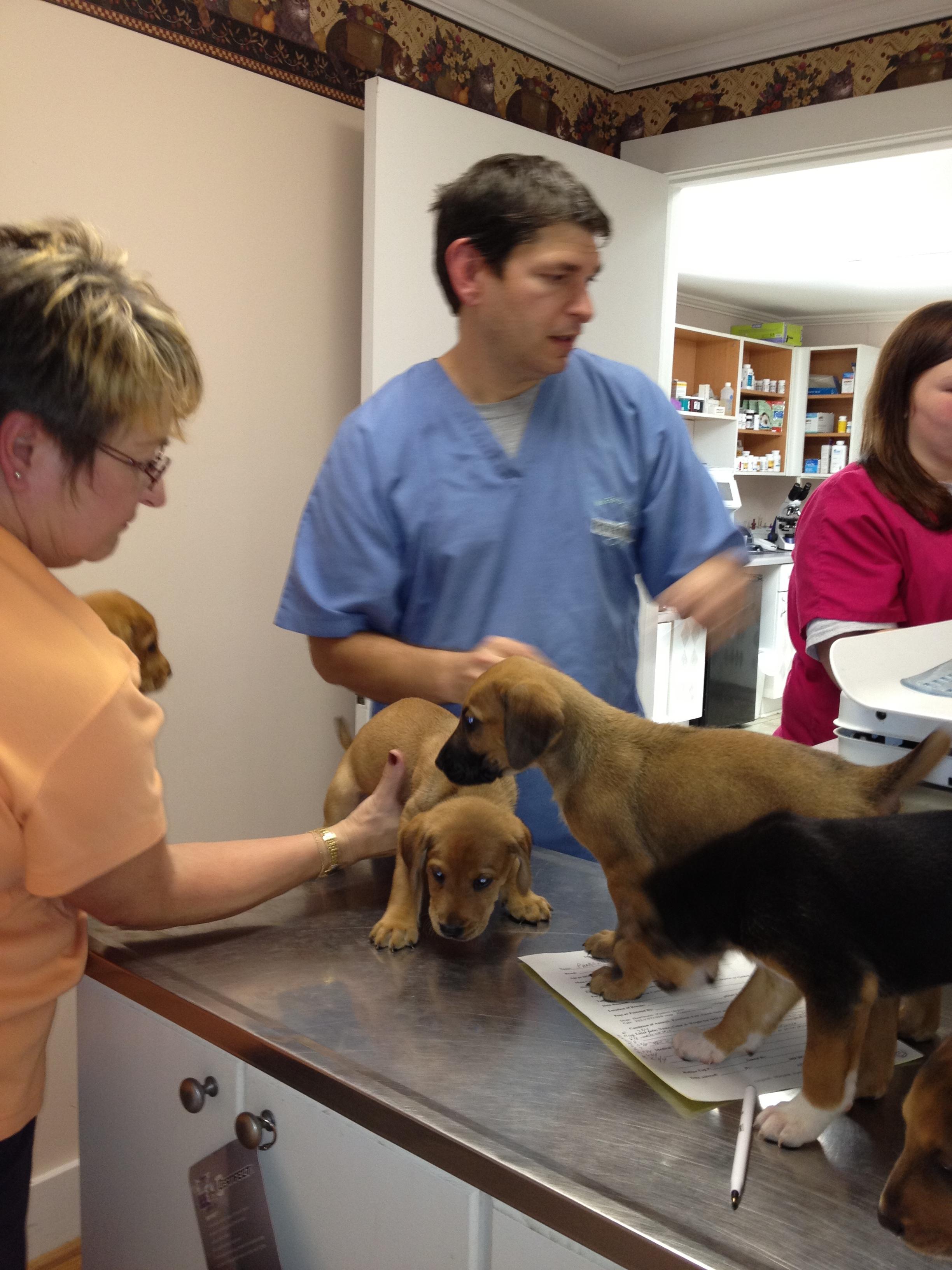 Pets Adoption Humane Society Of Mccormick County