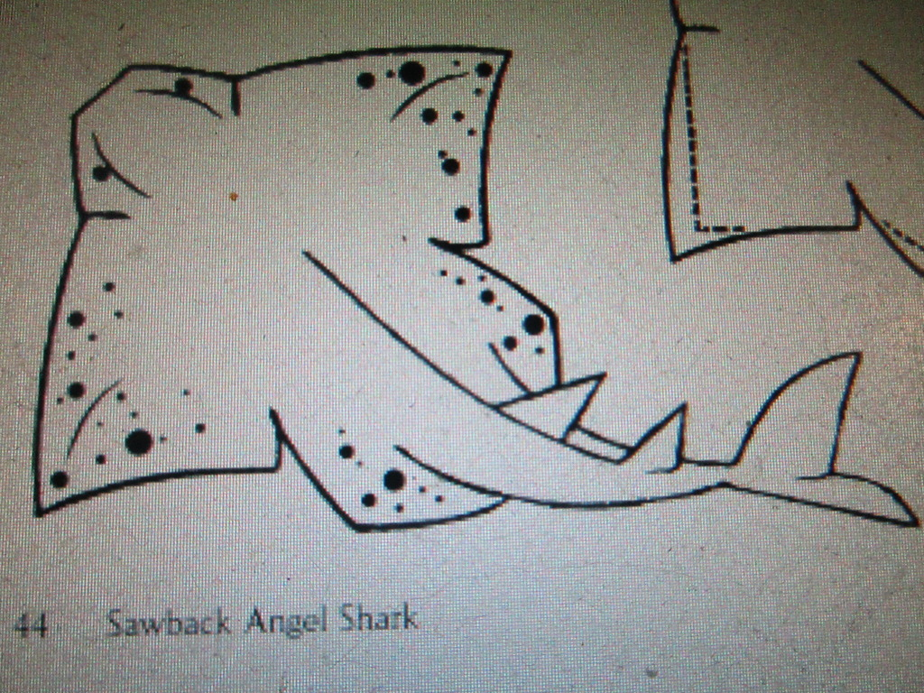 small resolution of sawback angel shark this one required me to draw a square no one said there would be squares